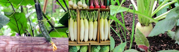 地域の農家さんのお野菜